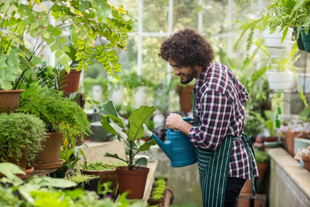 Man in plaid watering the plants