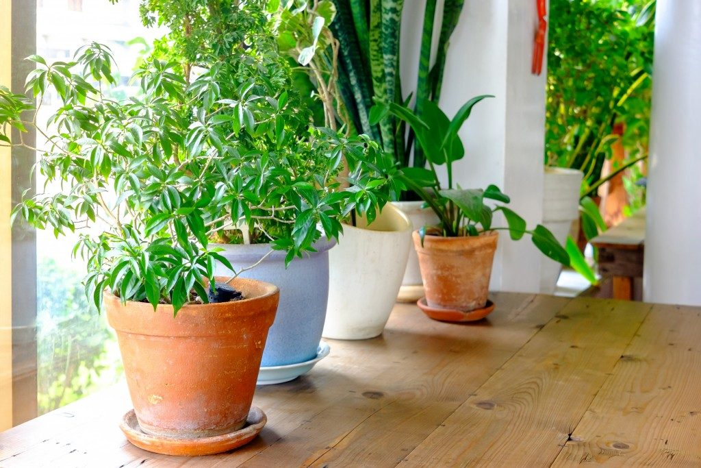 Plants beside the window
